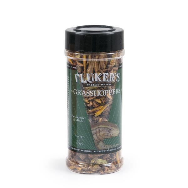 Freeze Dried Insects